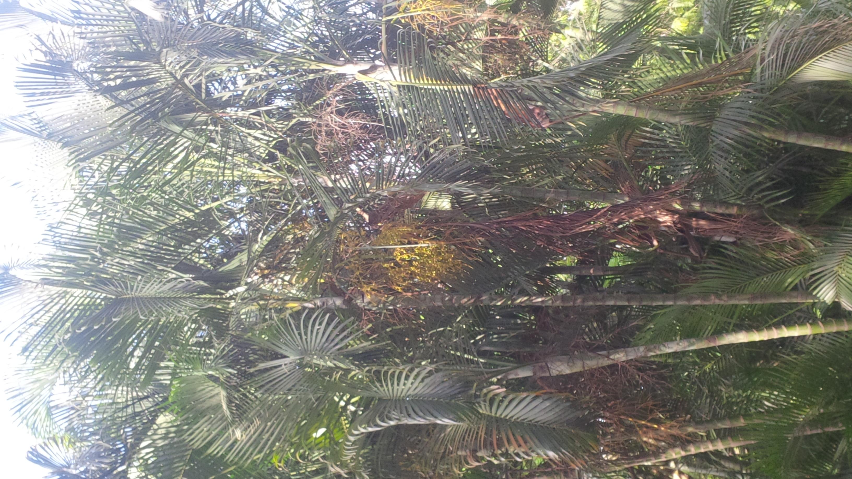 Bangalore - cubbon park